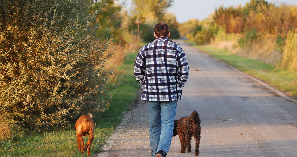 Why Dog Walking is Good for You
