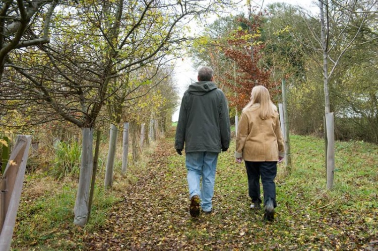 Why Walking and Talking Therapy Works