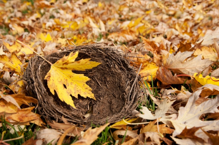 Will Autumn Bring an Empty Nest?