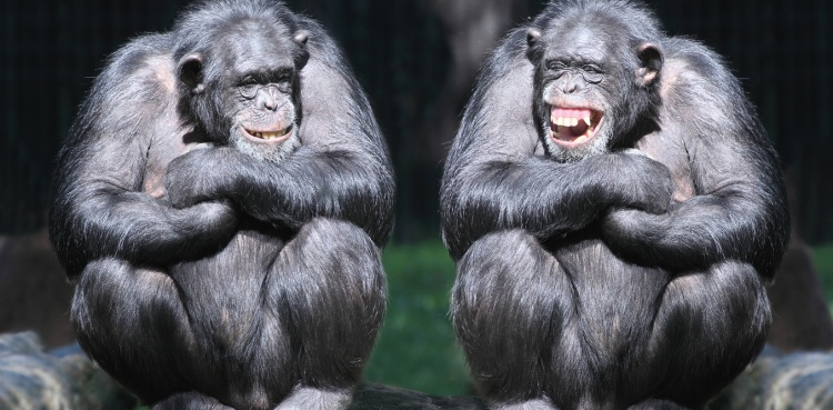 Why Did Laughter Evolve?