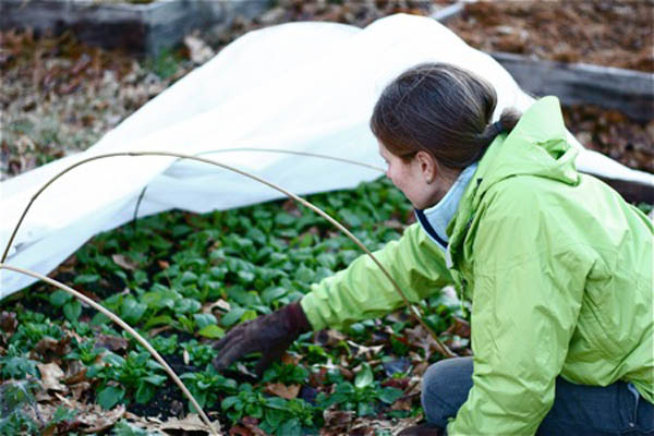 Reduce Stress with these Winter Gardening Tips